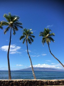 Maui Activity Concierge
